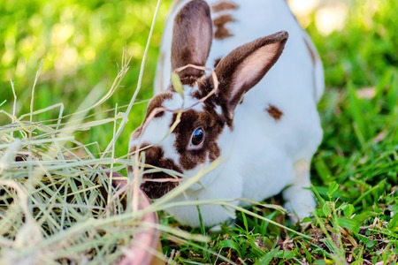 Mix Teddybear  rabbit  at green background
