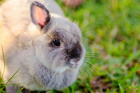 Mix netherlands dwarf rabbit  at green background Stock Photo