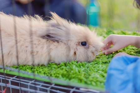 Satin Mini rabbit  at green background inside cage with hand of child pat over the head Stock fotó