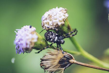 Close up macro shot of spider at the nature Banco de Imagens