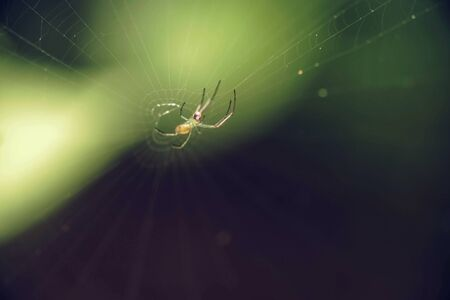 Colorfull spider hanging at the web on the green background