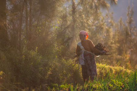 8 may 2018, Probolinggo-wonolerto , Suraba, indonesia : An old woman search firewood for cooking