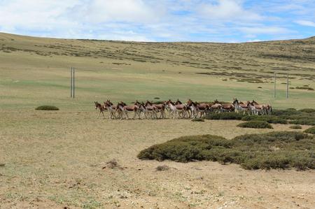 donkeys: Wild donkeys