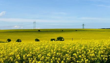 Spring meadow. Stock Photo - 9277755