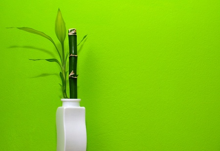 Bamboo in the white vase with green background. photo