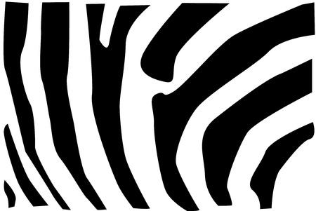 Detail vector illustration of zebra fur pattern.