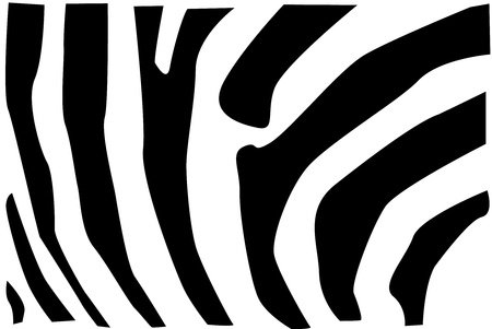 Detail vector illustration of zebra fur pattern. Vector