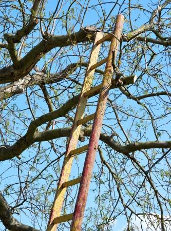 Trittleiter angelehnt an den Baum.