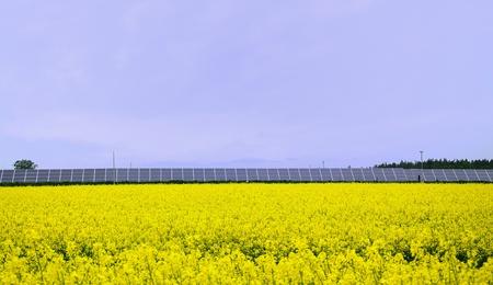 Yellow rape field with solar power station. Stock Photo - 9574384