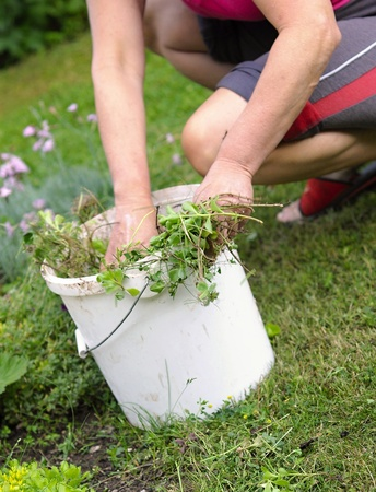 Garden work with flower and weed.