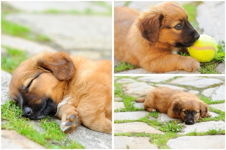 Abstract collage from photos of young dog. Stock Photo