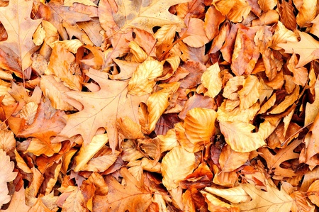 Background from autumn foliage on the ground. photo