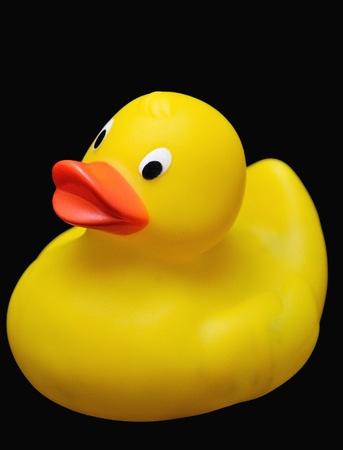 Clásico pato amarillo de plástico colocada sobre el fondo negro.