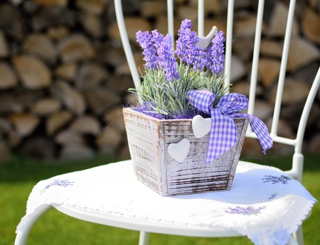 Lavender in the wooden pot placed on the metal chair in the garden  Home decoration  photo