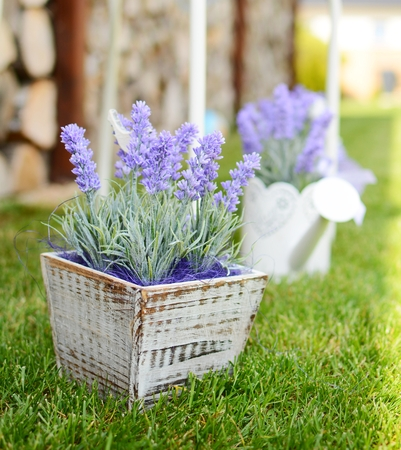 Lavender in the wooden pot placed to the grass in the garden  Home decoration  photo