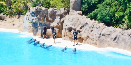 PUERTO DE LA CRUZ, SPAIN - SEPTEMBER 10: Dolphins during show with their trainers on September 10, 2014 in Loro Parque, Puerto De La Cruz, Tenerife, Spain. Loro Parque is one of the most famous attraction in Tenerife. Dolphin show pool is largest in Europ