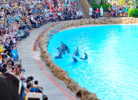 PUERTO DE LA CRUZ, SPAIN - SEPTEMBER 10: Dolphins greets viewers on September 10, 2014 in Loro Parque, Puerto De La Cruz, Tenerife, Spain. Loro Parque is one of the most famous attraction in Tenerife. Dolphin show pool is largest in Europe.