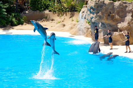 PUERTO DE LA CRUZ, SPAIN - SEPTEMBER 10: Dolphins during show in high jump on September 10, 2014 in Loro Parque, Puerto De La Cruz, Tenerife, Spain. Loro Parque is one of the most famous attraction in Tenerife. Dolphin show pool is largest in Europe.