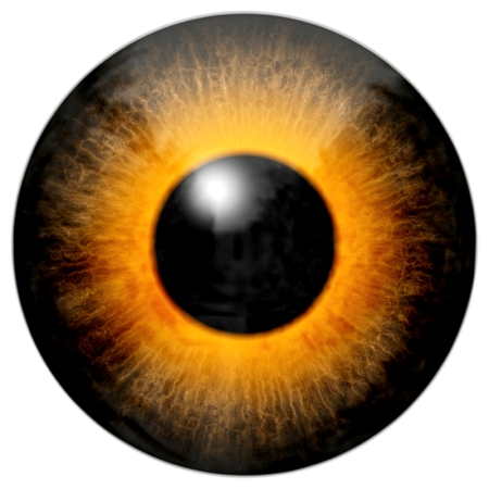 light reflection: Illustration of a brown orange eye with light reflection on a white background.