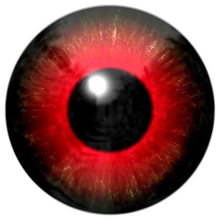 light reflection: Illustration of a red eye with light reflection on a white background. Illustration