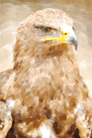 chrysaetos: Abstract watercolor digital generated painting of the Golden Eagle portrait.
