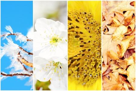 four season: Four season collage with photos of winter, spring, summer and autumn theme.