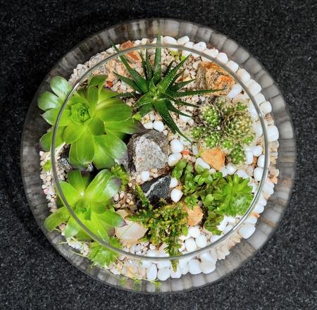 サボテンと多肉植物の透明なガラスのバブルでテーブル トップの屋内装飾的なミニチュア ガーデン。多肉植物とサボテンの植物の装飾的なガラスの 写真素材