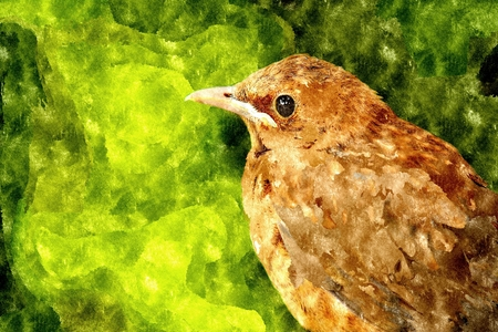 thrush: Abstract watercolor digital generated drawing with thrush on green background.