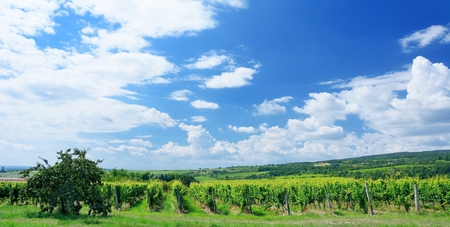 znojmo: Sobes vineyard in South Moravia near Znojmo town in Czech Republic. One of the oldest and best placed vineyard in Europe. Vineyard in day with blue sky. Stock Photo