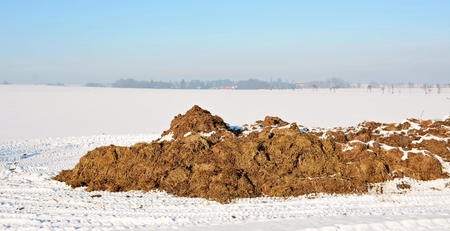 Rural scene with heap of cow dung on snowy field.