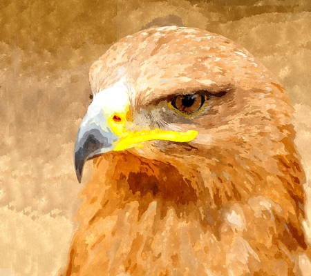 Watercolor digitally generated painting of the Golden Eagle portrait.