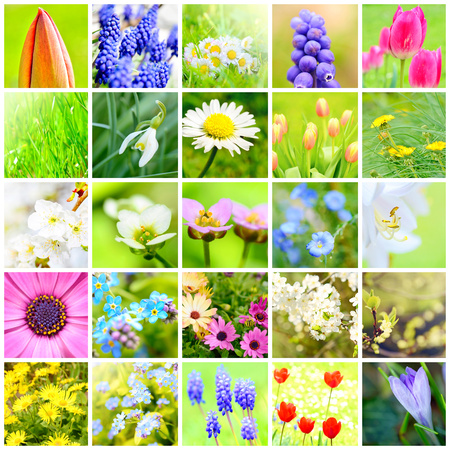 Spring flower collage with pictures of the plants and flowers in garden.