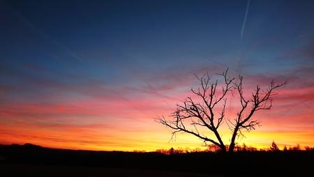 Beautiful vivid red orange sky during sunrise with tree silhouette. 版權商用圖片