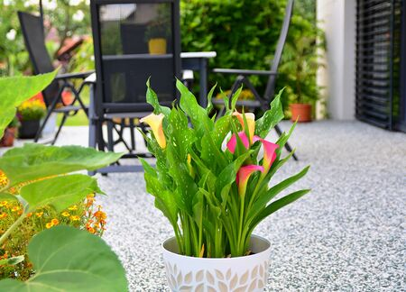 Beautiful Terrace with Decorative Natural Stone Floor, Potted Calla Lily Flower and Table with Chairs.