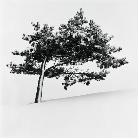 lone tree 스톡 콘텐츠