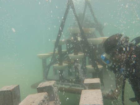 Deployed artificial reef at Redang island, Malaysia 写真素材
