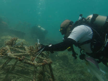 Coral transplant at coral nursery area in Marine park Redang, Malaysia