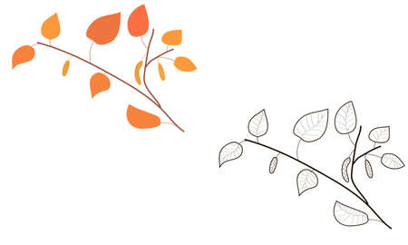 birch branch. doodle coloring. black and white version and color. autumn foliage. fall. plants and trees. coloring book for children. Birch. stickers