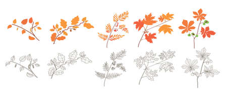 tree branches. autumn forest. plants and trees. autumn foliage. twig. chestnut, maple, mountain ash, oak, birch. harvest. forest fruits. fall. acorns. coloring for children. autumn coloring. stickers. set of autumn foliage. autumn nature Çizim
