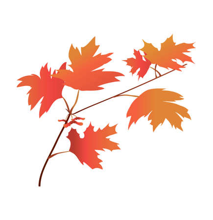maple branch in gradient color. autumn foliage. texture gradient. vector. detail for printing and postcards. maple plane Çizim