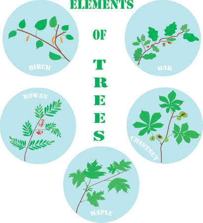 elements of trees. botanical illustrations. picture for children's educational literature. forest trees. branches. spring and summer foliage. vector. print of botanica Иллюстрация