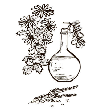 round bottle with liquid surrounded by herbs, chamomile, mint, olive and wheat. monochrome graphics. black and white vector illustration. medical botanical painting
