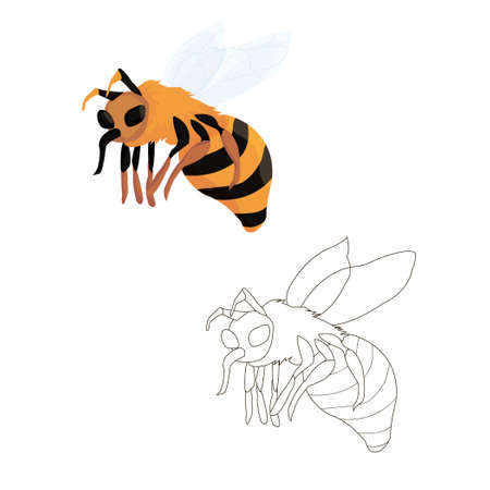 bee in flight coloring book for children. option in color and black and white. coloring book for children on the theme of animals and insects. vector isolated. line art and cartoon. sticker