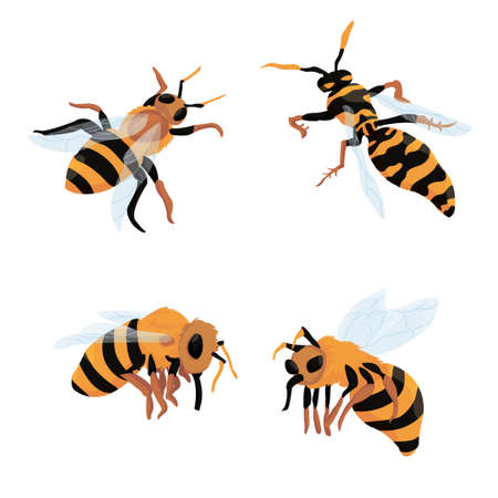 three bees and one wasp on a white background. set of bees. vector isolated. beekeeping. production of honey. mascots, logo.