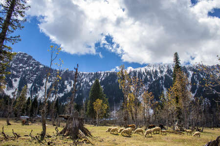 Living and Grazing Stok Fotoğraf - 98642168