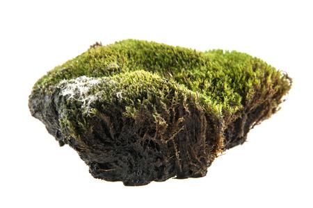 turf isolated on white background