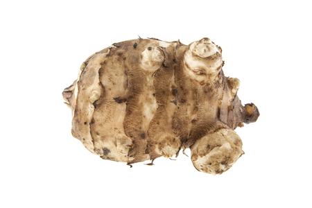 helianthus: Root of Jerusalem artichoke isolated on white background