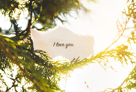background designs: I love you text in a pine tree in vintage colors. Stock Photo