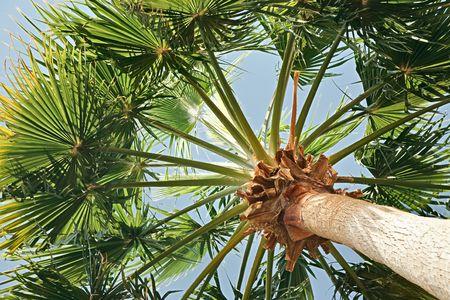 Green palm tree on sky background photo