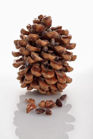 cedar of Lebanon cone isolated on white photo